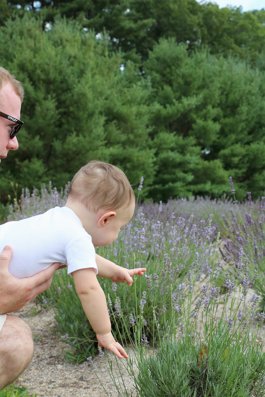 lavender farm | a merry crew