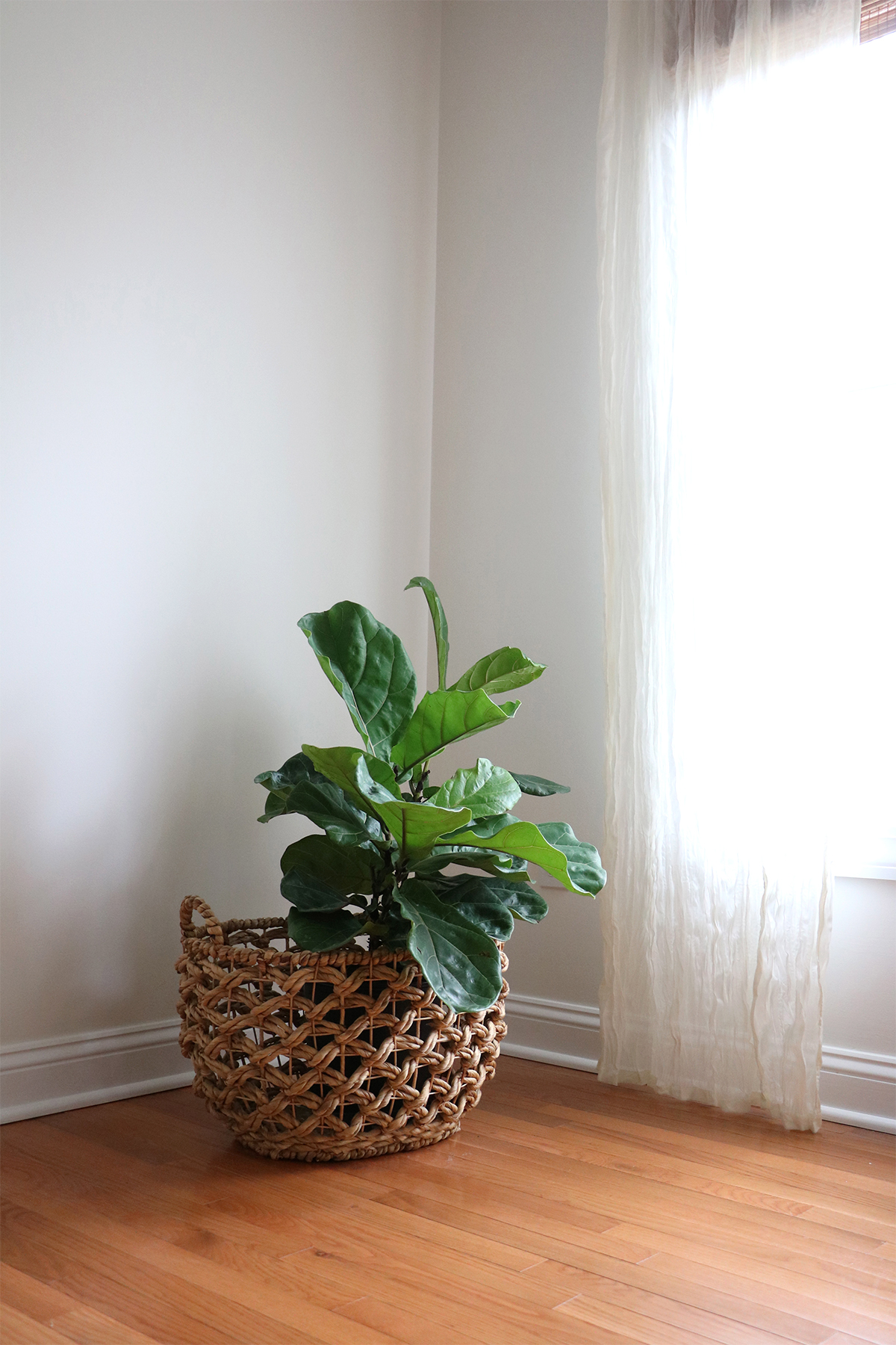 5 easy to care for houseplants   root + dwell