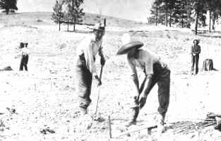 Planting the First Fruit Tree