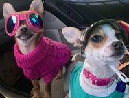 BiBi and GiGi. Mascots