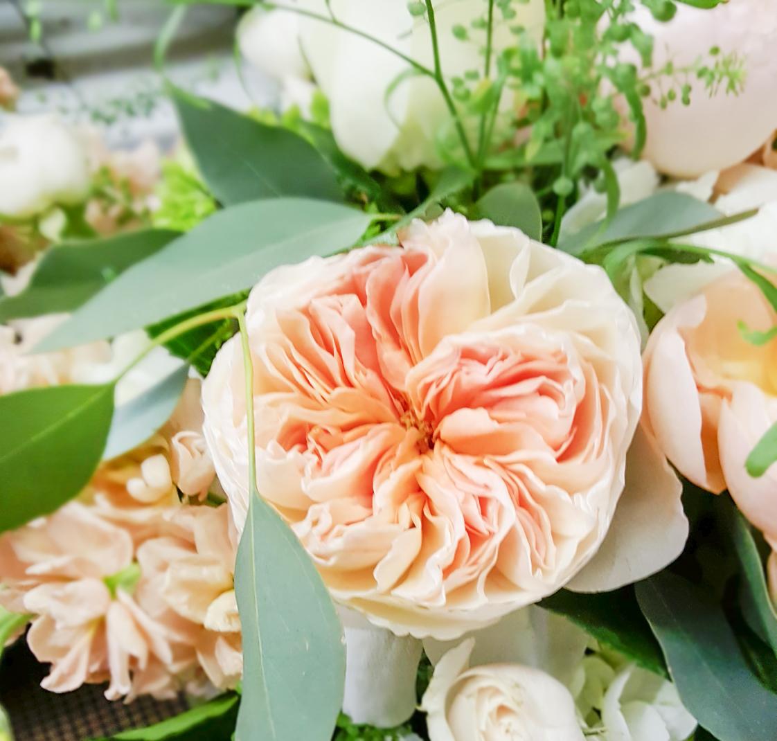 Juliet rose.jpg