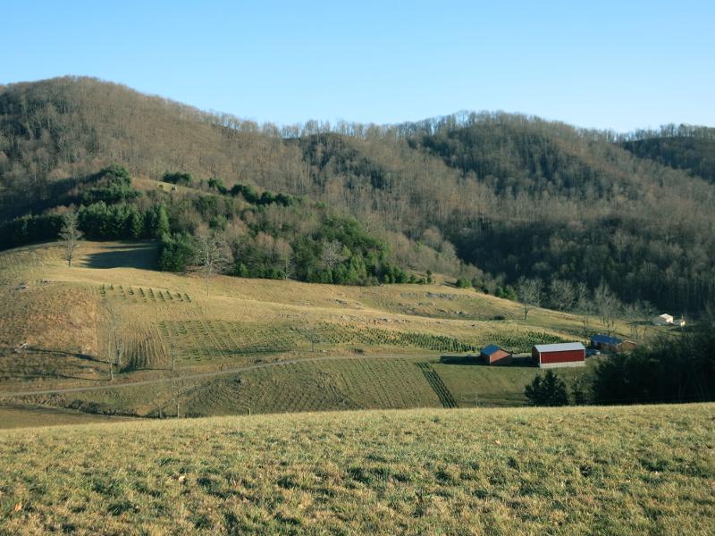 Hidden Fields Farm View to tree fields by Country Garden Florist