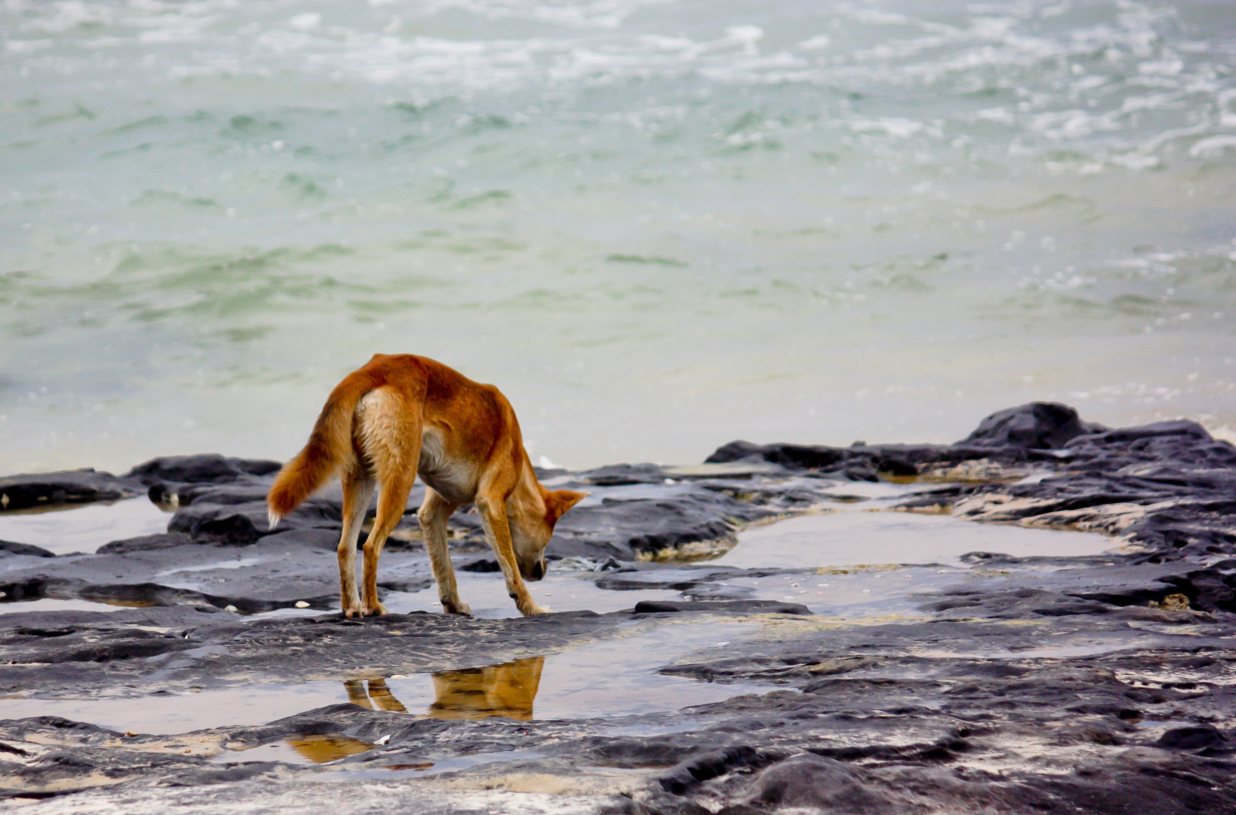 FPM Dingo helps you examine the challenge  (Image: (c) Squirel77 | Dreamstime.com)