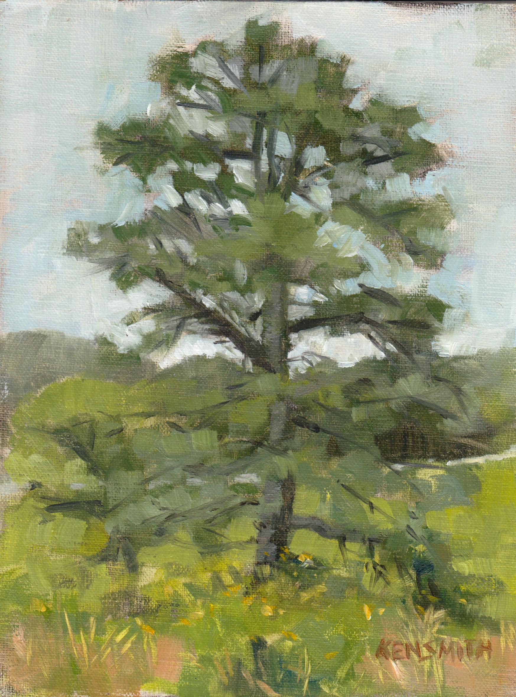 Rocky Knob Pine