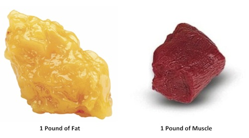 losing one pound of fat makes a huge difference, especially compared to gaining a pound of muscle.