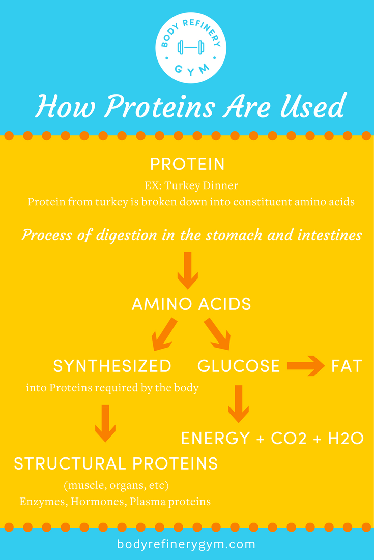 ProteinFlowChart
