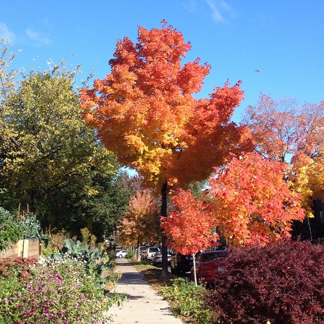 2014-10-16_1413424580.jpg