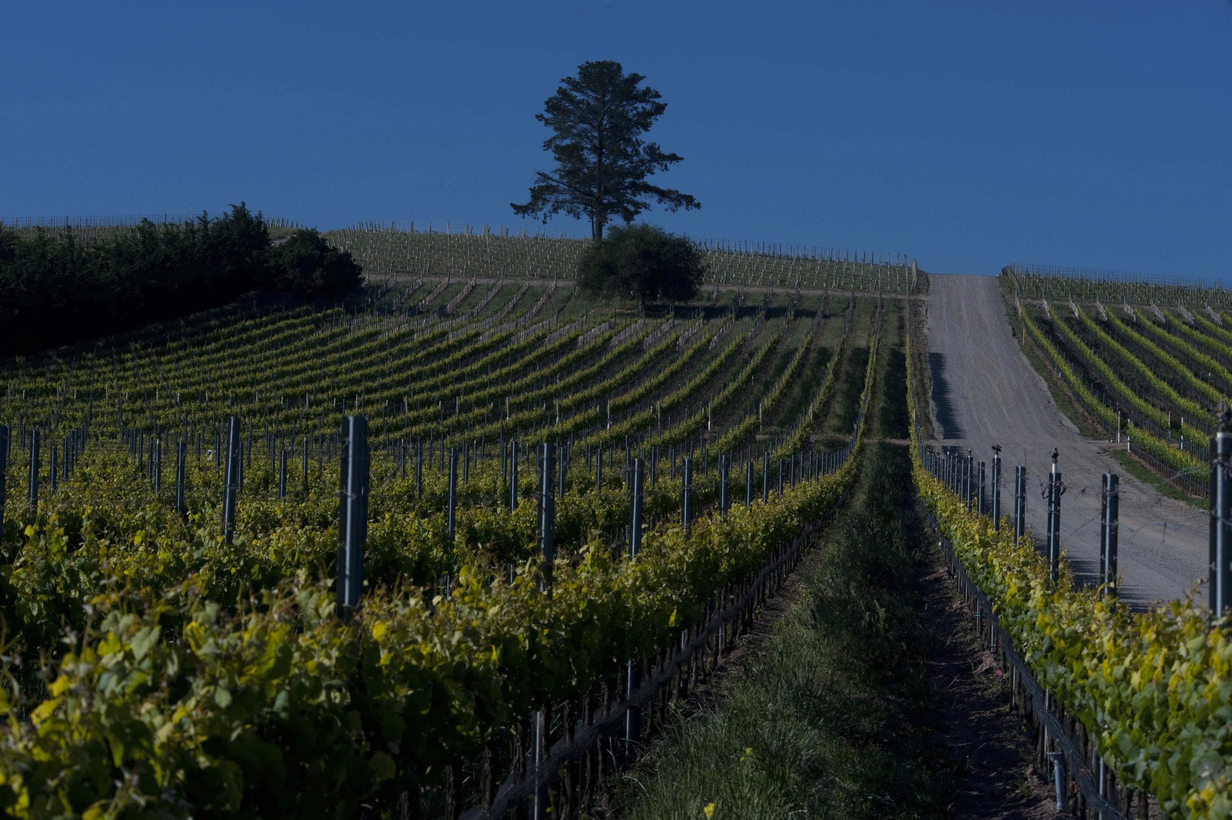 Presquile-Vineyards.jpg