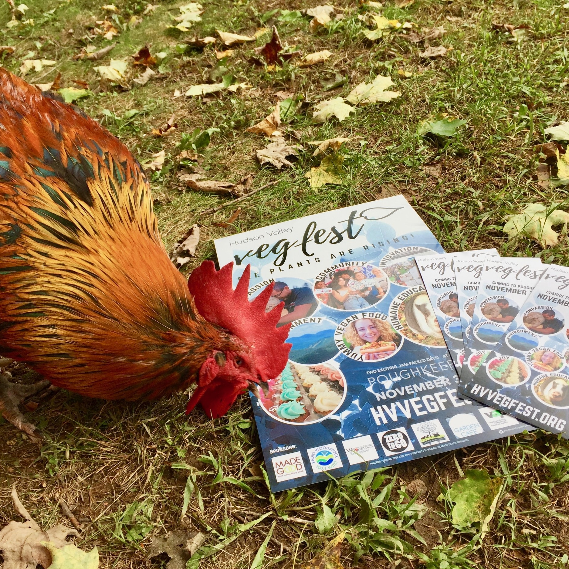 Zoltan, another rescue at The Institute, admiring the printing quality of 2018 Posters and Rack cards printed by VEGAN PRINTERS!