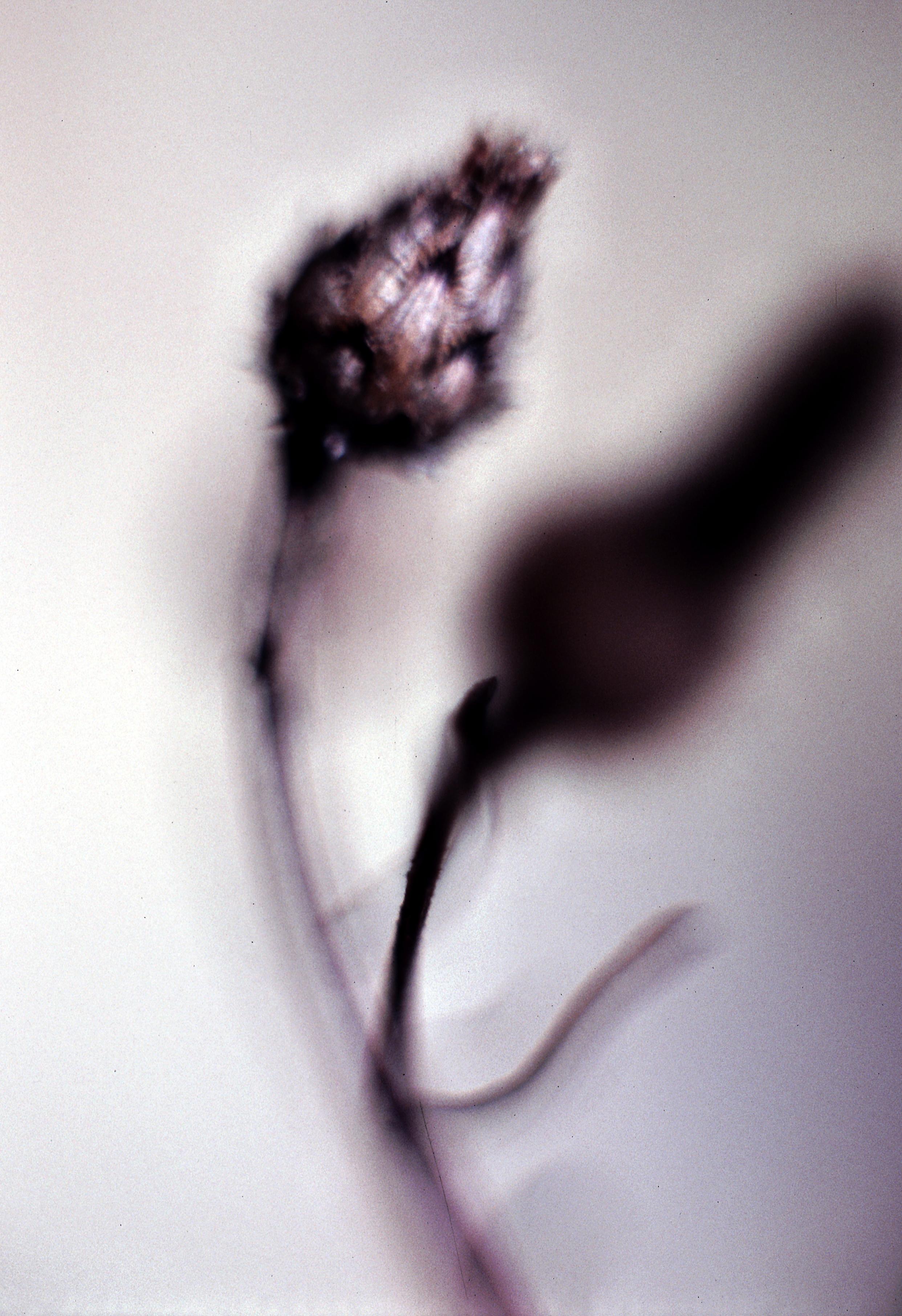 Willowing Flower.jpg