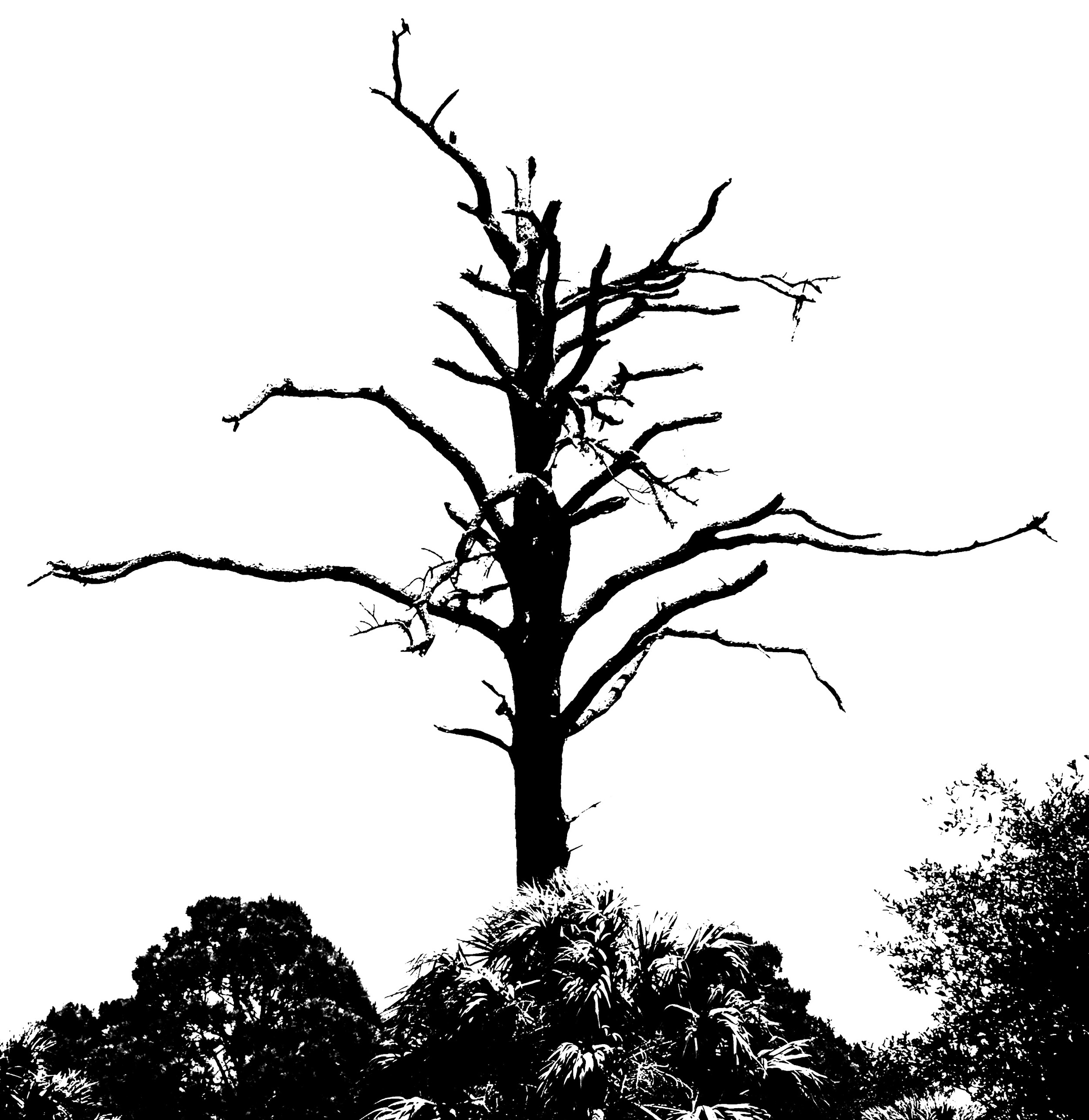 Burnt Tree - Copy.jpg