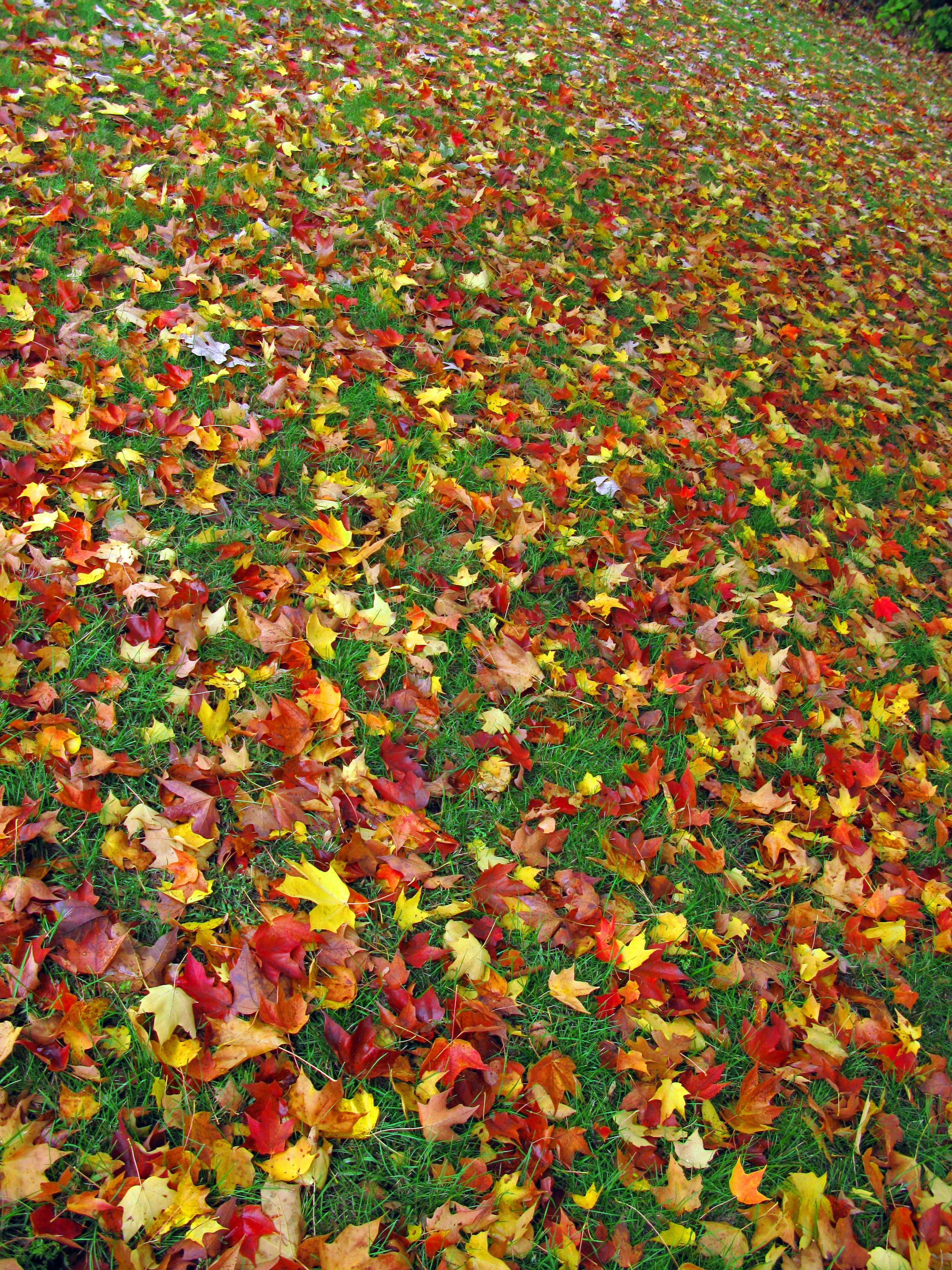 Fallen Fall Leaves.jpg