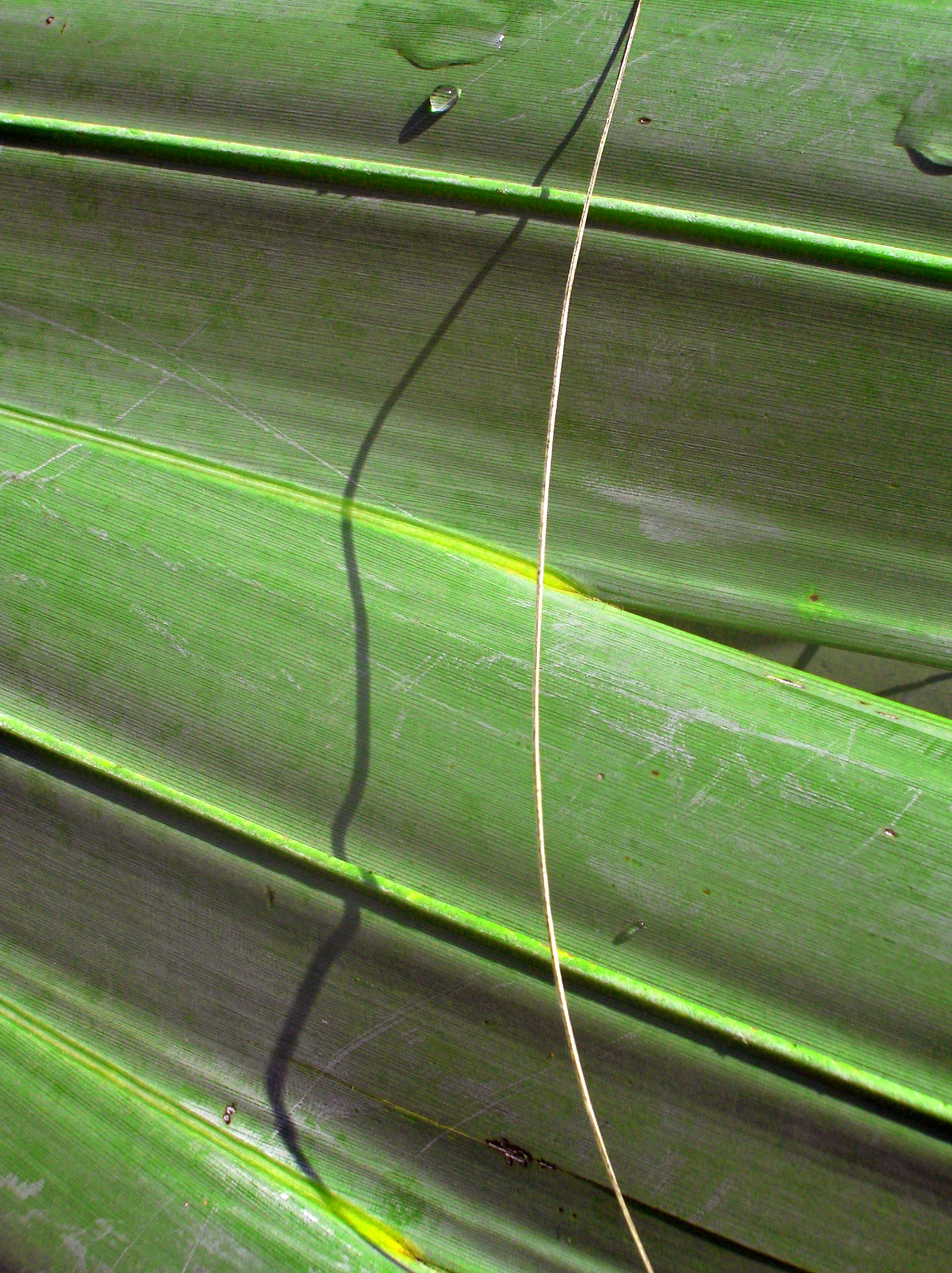Palm Leaf Abstract.jpg