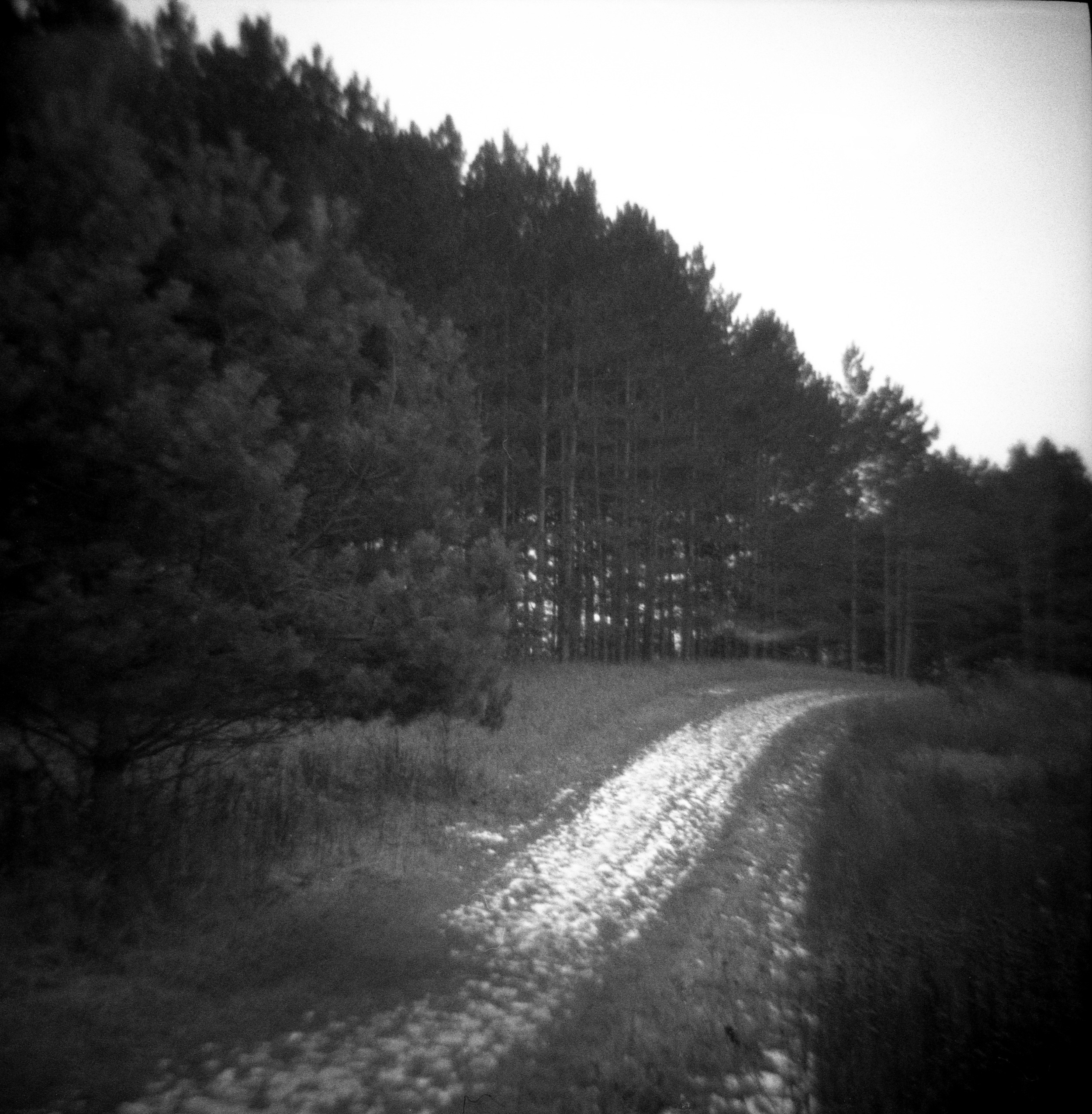 The Trail_edited-1.jpg