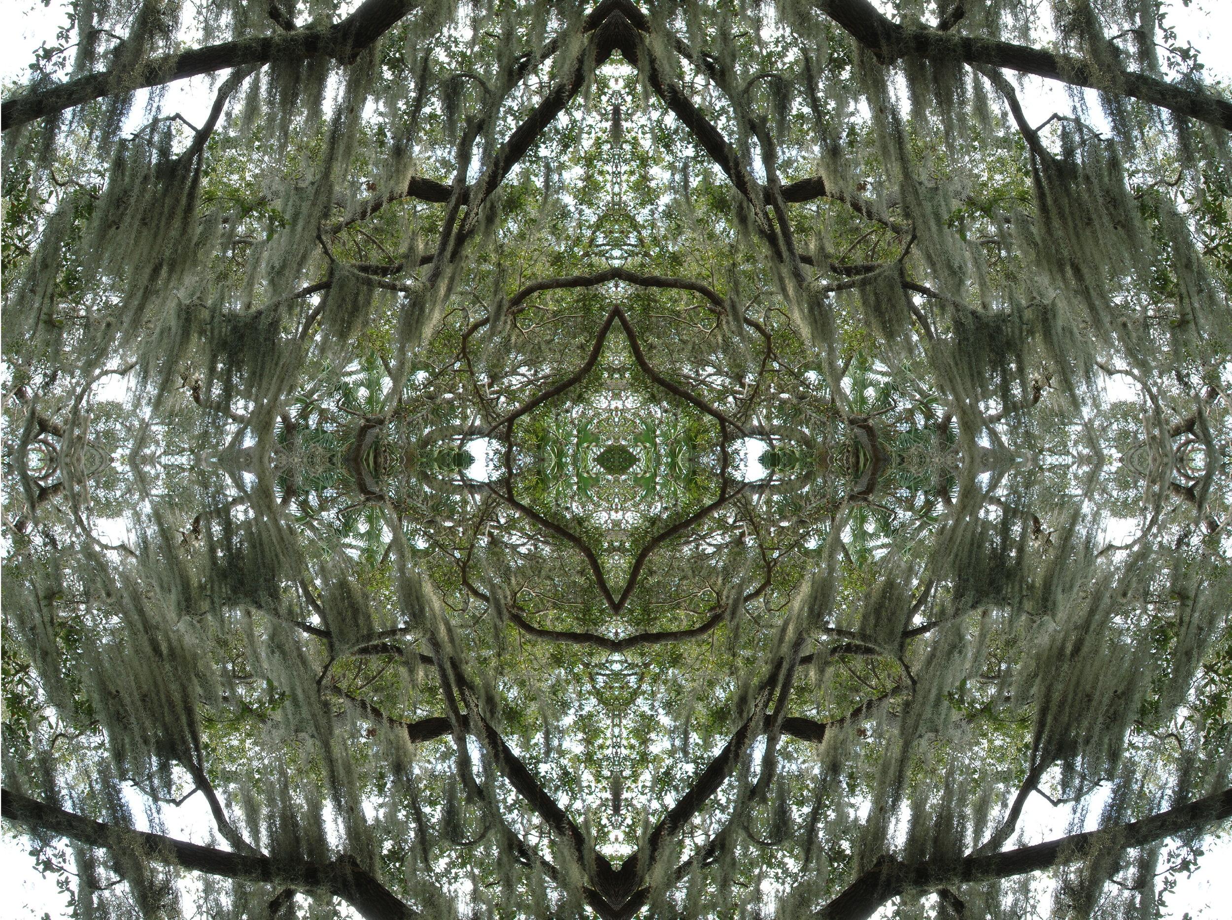 Tree & Moss Kaleidoscope.jpg