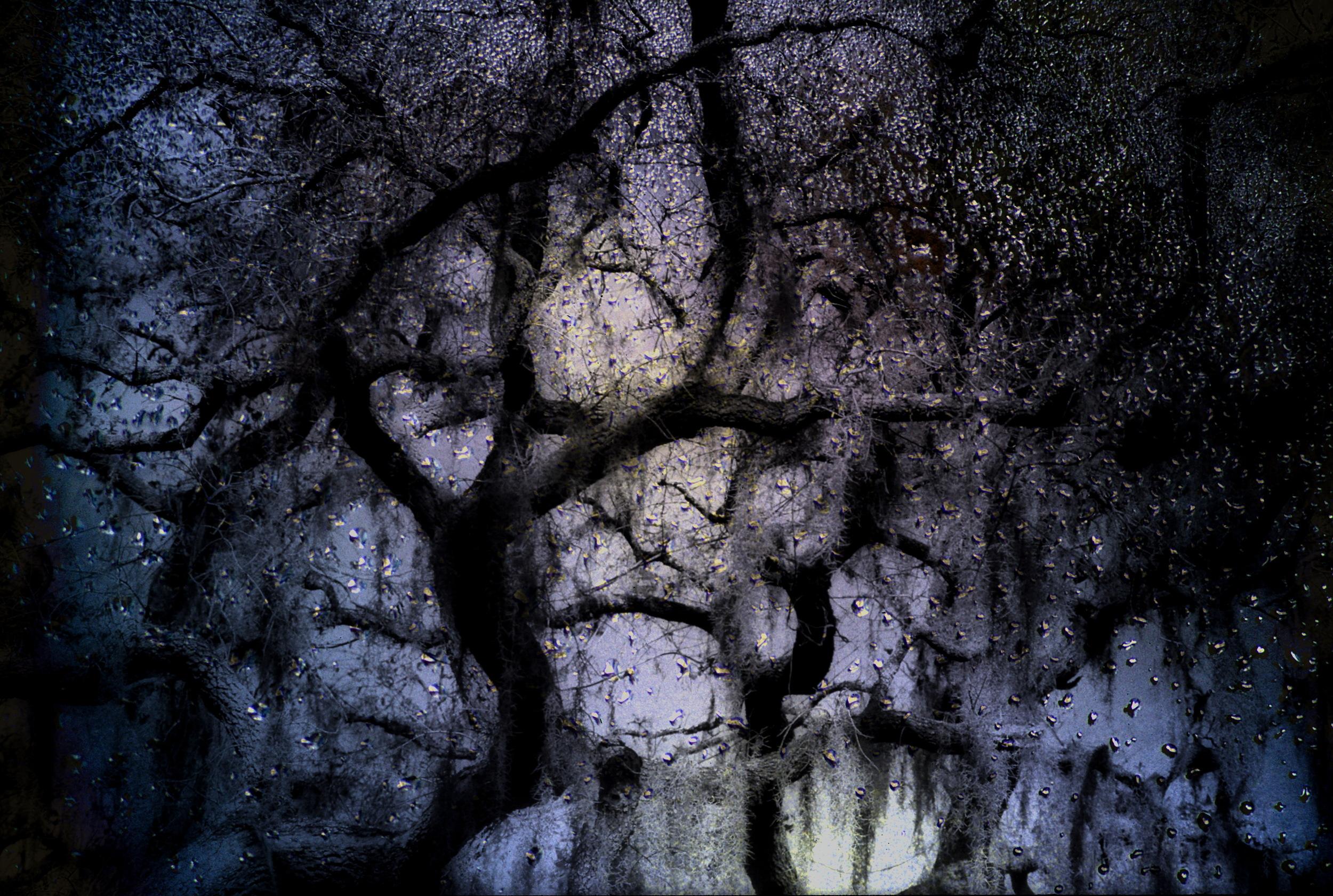 Twisted Trees & Rain.jpg