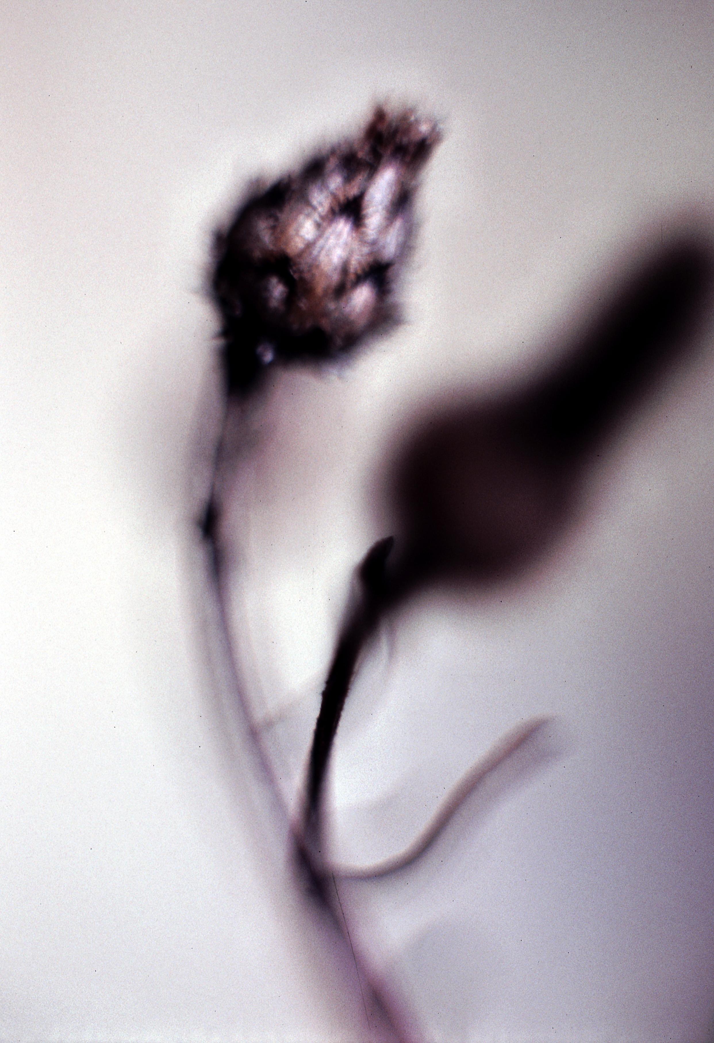 Dancing Flower.jpg