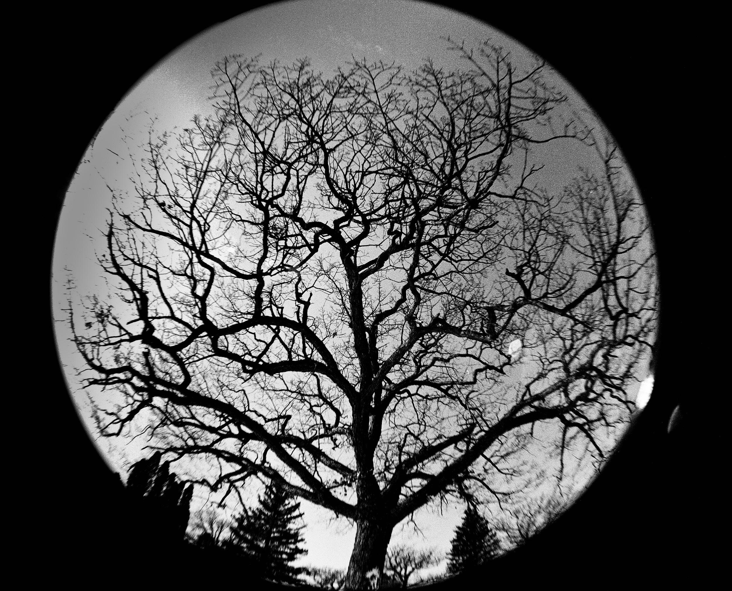 Phalen Tree, Fisheye View (1 of 1).jpg