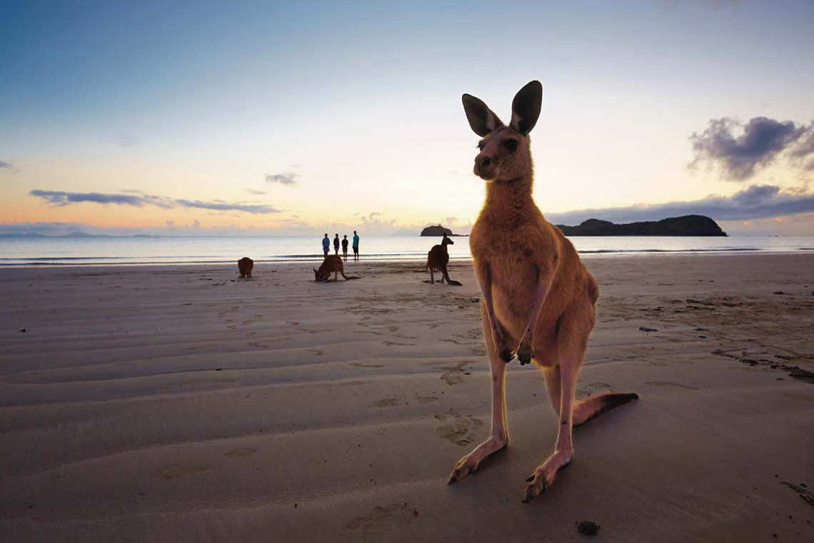We have kangaroo's on the beach. How could you resist beach kangaroo's?