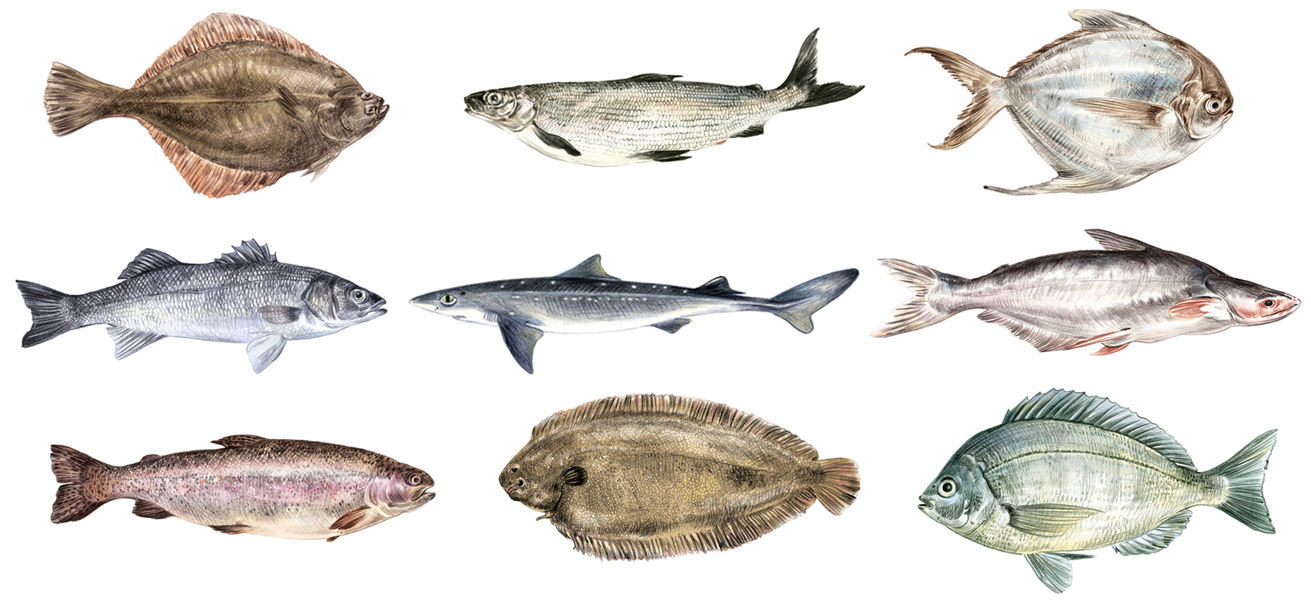 Fische2.jpg