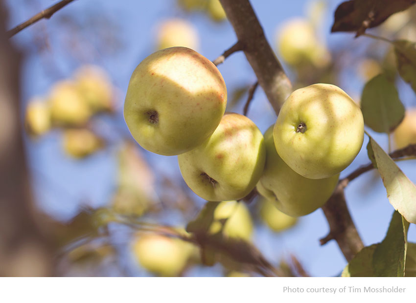apple_day_broomfield_park