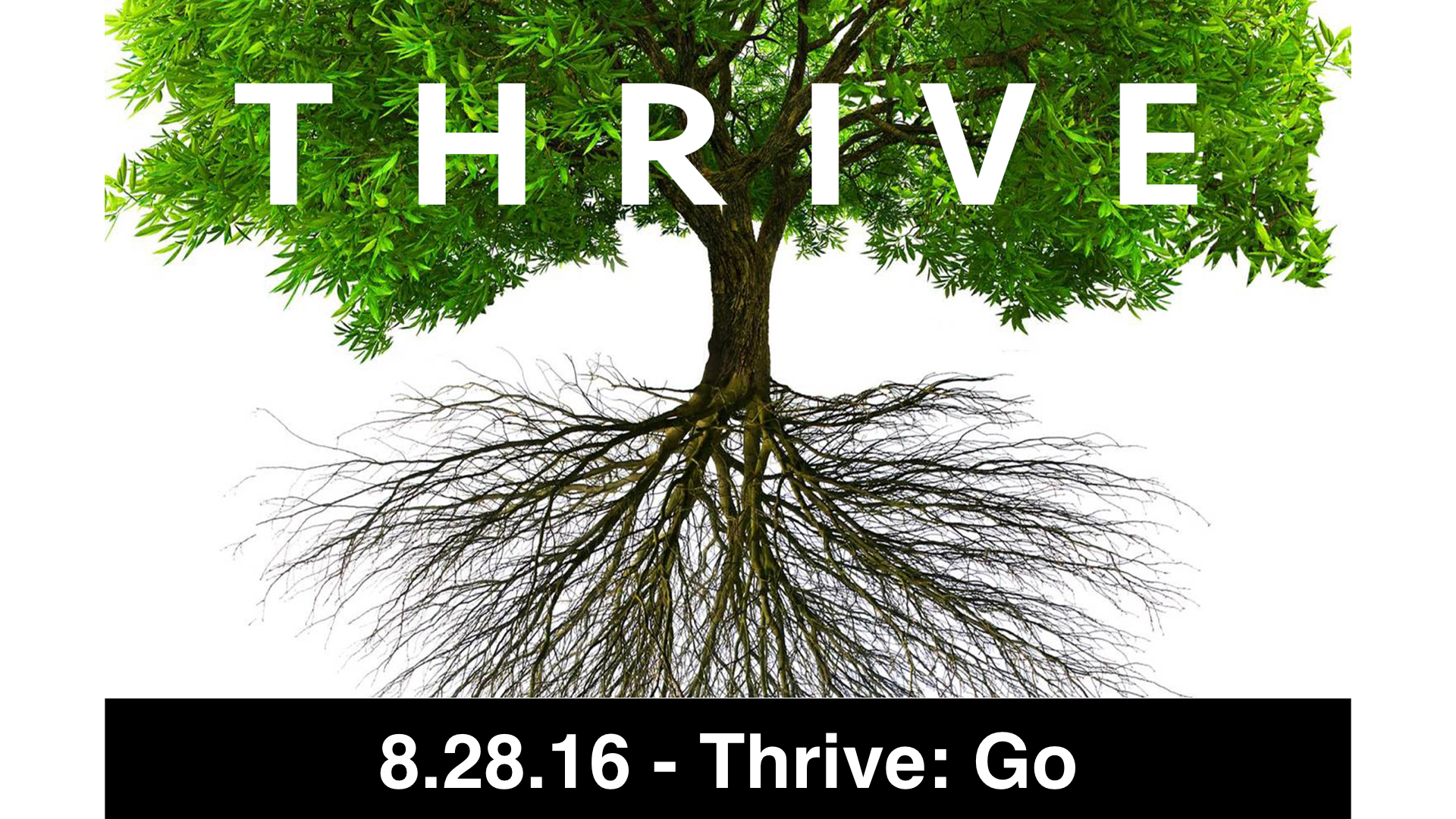 08-28-16 - Thrive: Go