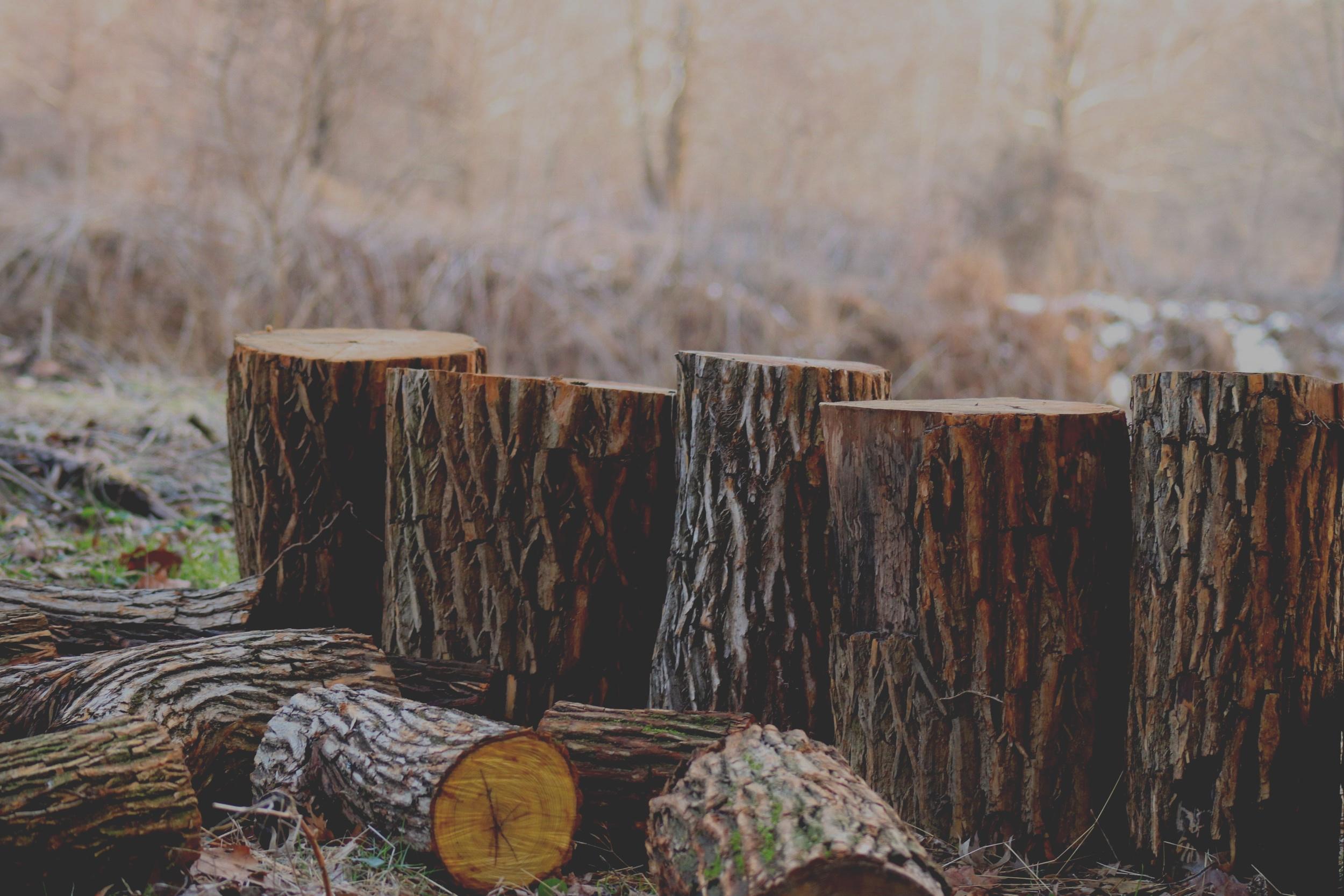 Wood Shop -
