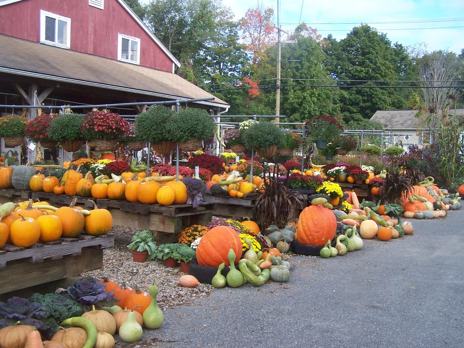freunds farm market