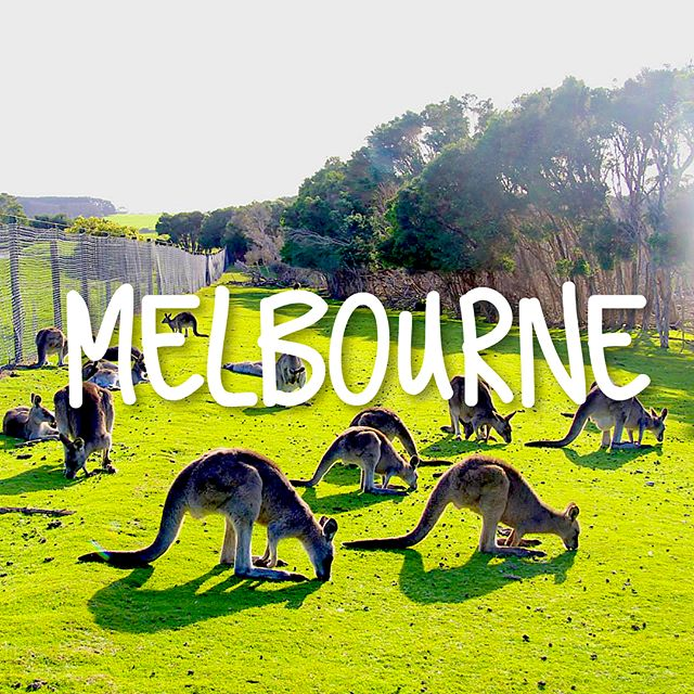🇦🇺Melbourne 10 things  1⃣ 🐨 Meet Your Australia Wild Friends 2⃣ 🚙 Drive through #OceanRoad 3⃣ 👅 Taste Local Brunch @TheHardwareSocieti 4⃣ 🏘 Visit Colorful BeachHouse @Bondi  5⃣ 🖍 Enjoy the City Art 6⃣ 🌞 Picnic at #SouthYarra Park 7⃣ 🥄 Eat Street Food #PieFace 8⃣ 🚃 Take Traditional #Tram 9⃣ ⛰ Get Close to Three Sisters Rock 🔟 🚲 Biking Along the Coast  #designerwhotravel #melbourne #australia #creativeminds #meettheworld  #designer #nomad #kangroos #animal