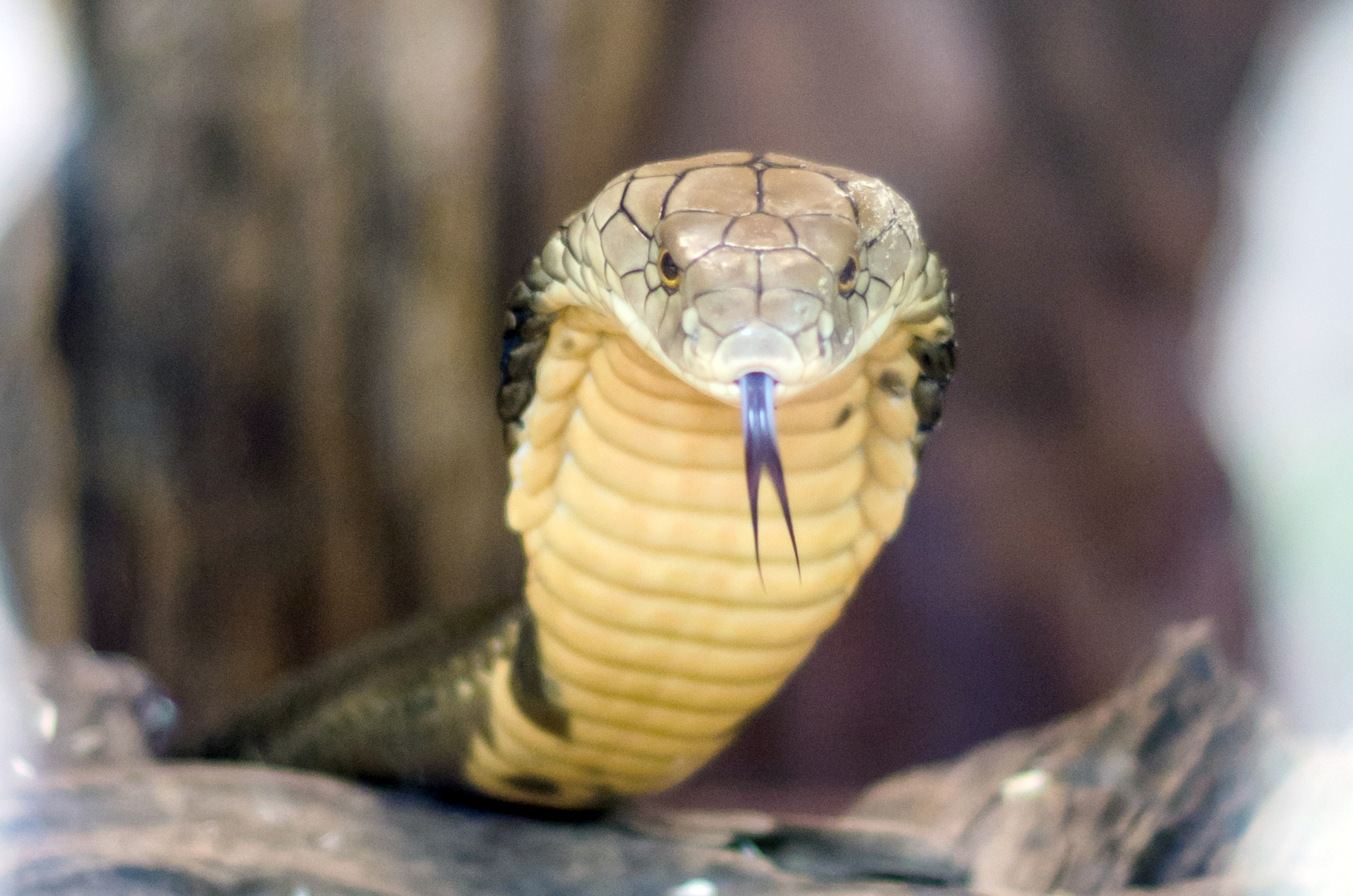 Edisto Serpentarium