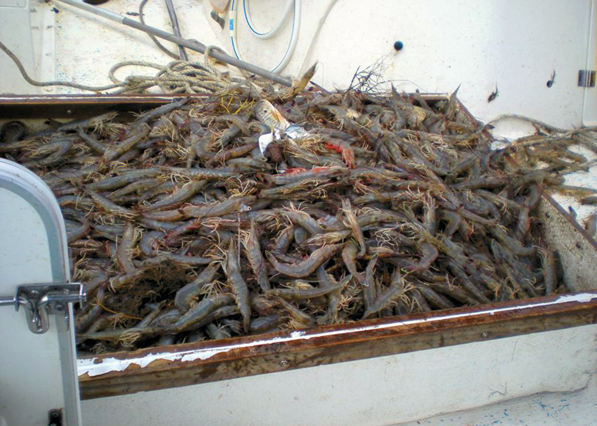 Edisto Shrimp Boat Charter's