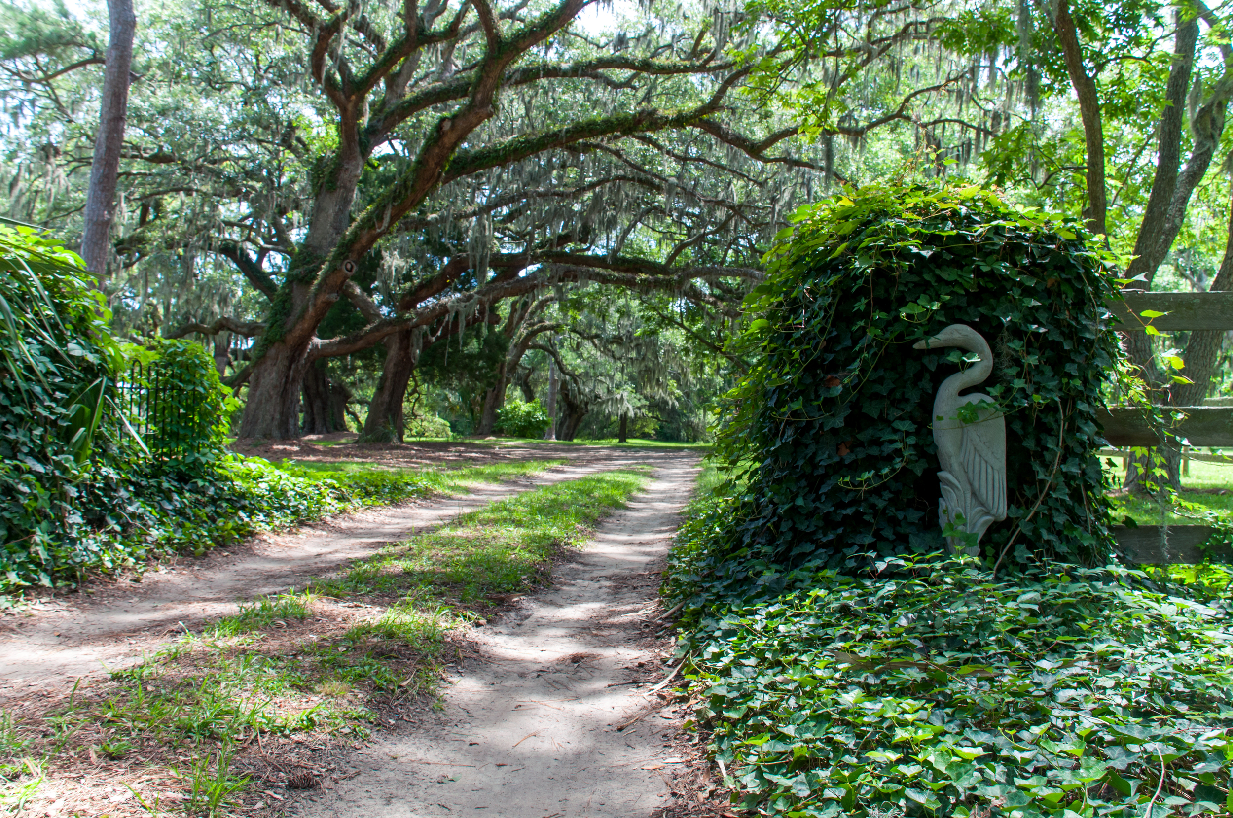 Ivy surrounds a statue of a poised egret lining the entrance to Cassina Point.