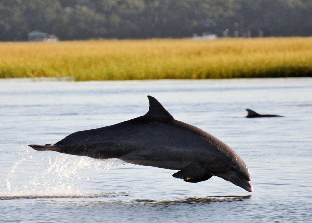 Dolphin+(1).jpg