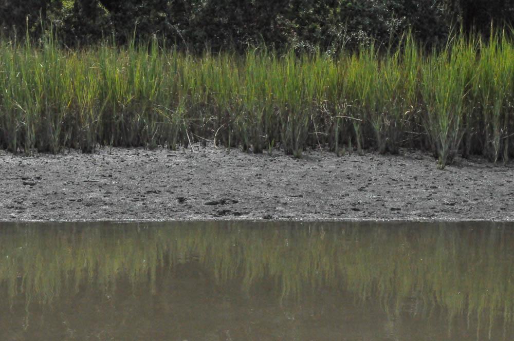Marsh-0477.jpg