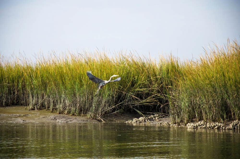 Marsh_Bird-8605.jpg