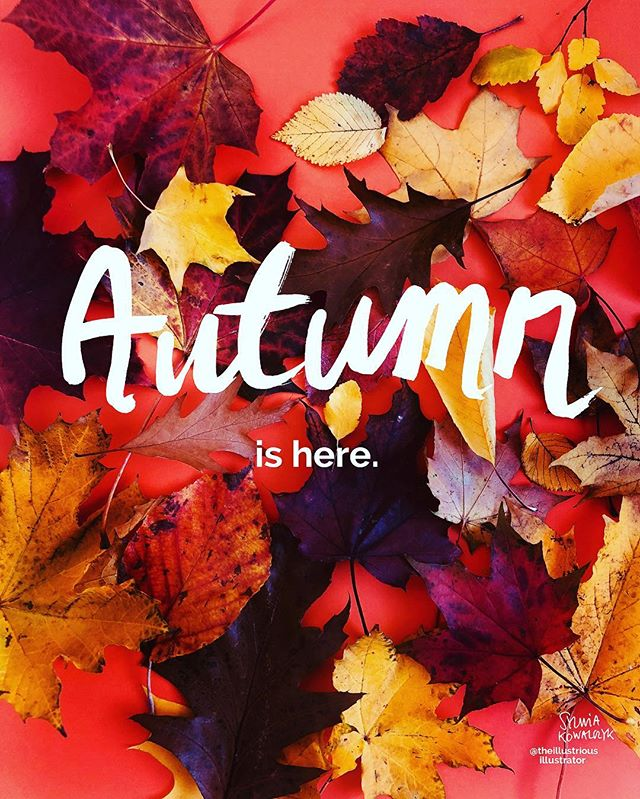 Oh, hello. 🍁 #autumn #wordsandpictures #moderncaligraphy #handwriting #handwritten #editiorialillustration #illustratorscotland #scotlandillustrator #edinburghillustrator