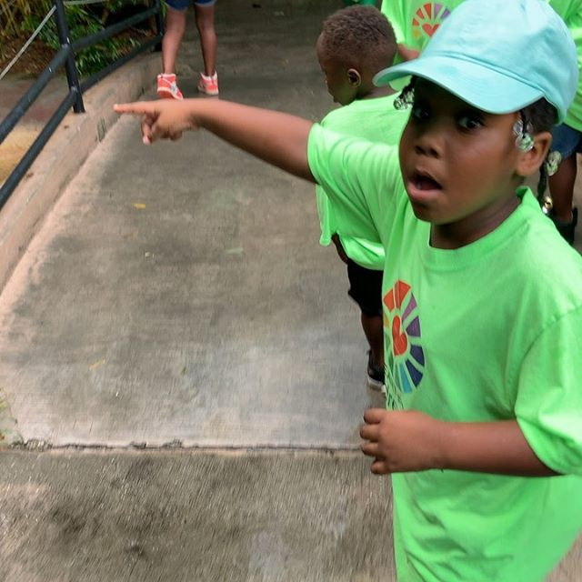 Our kids at @hfcjax had such an amazing time at the @jacksonvillezoo for their first official camp field trip. Thank you for your hospitality and fascinating experience! We look forward to coming back! #hfcjax