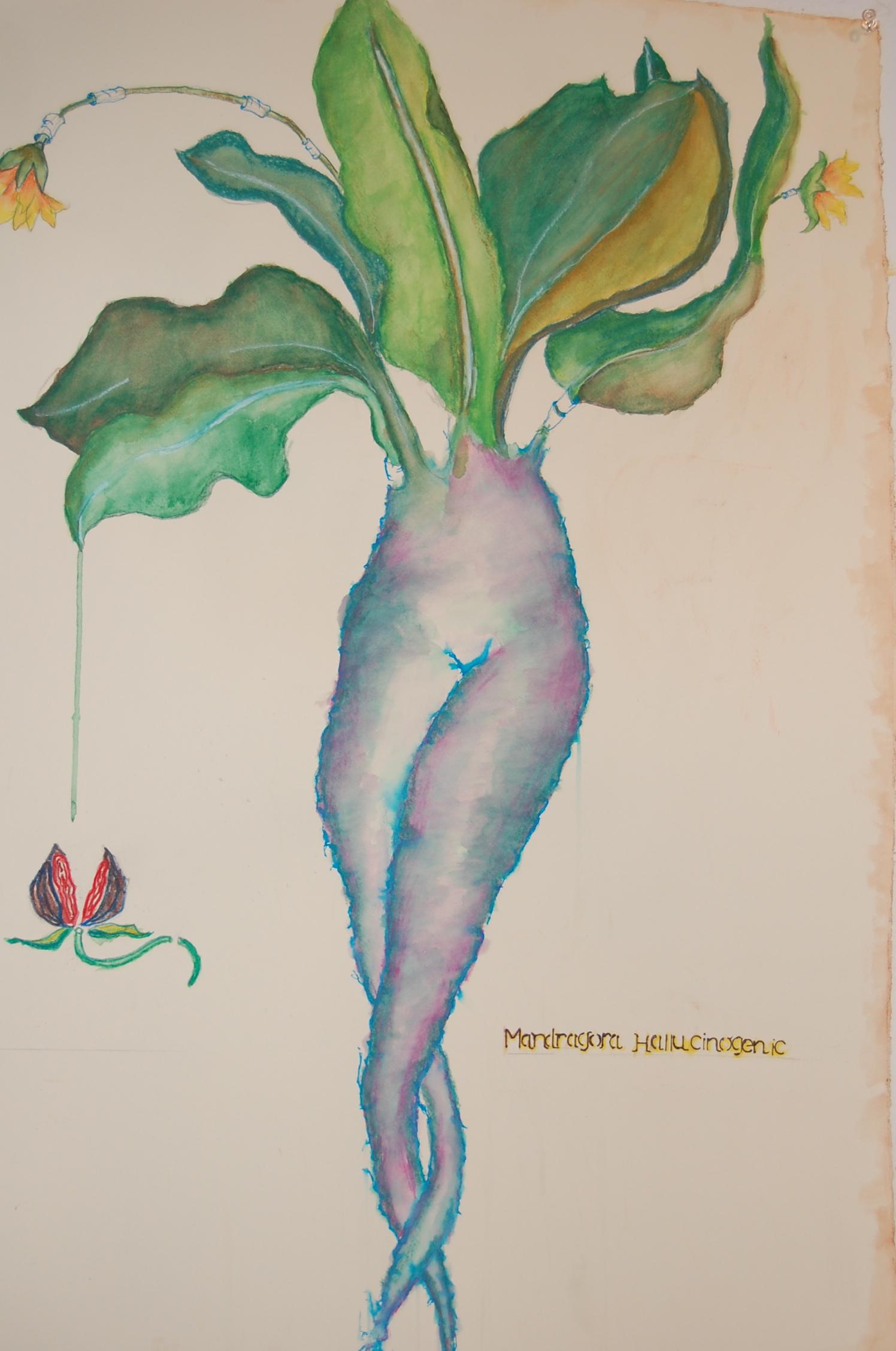 Mandrake Rising