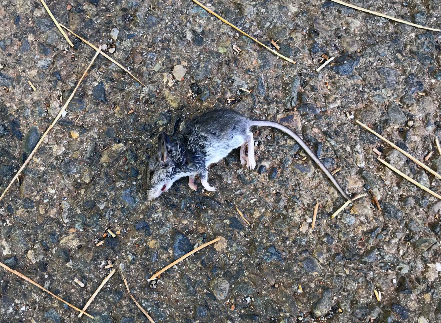 """""""Stupid mouse, never saw it coming."""" """"What's up with whatever killed it? Didn't even eat it?"""" """"It's not about food!It's about Power! """"or """"Poor mousey!"""" Maybe some wisdom about nature and the universe? Does it even matter?"""
