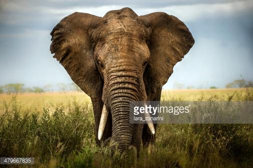 Photo by lara_zanarini/iStock / Getty Images