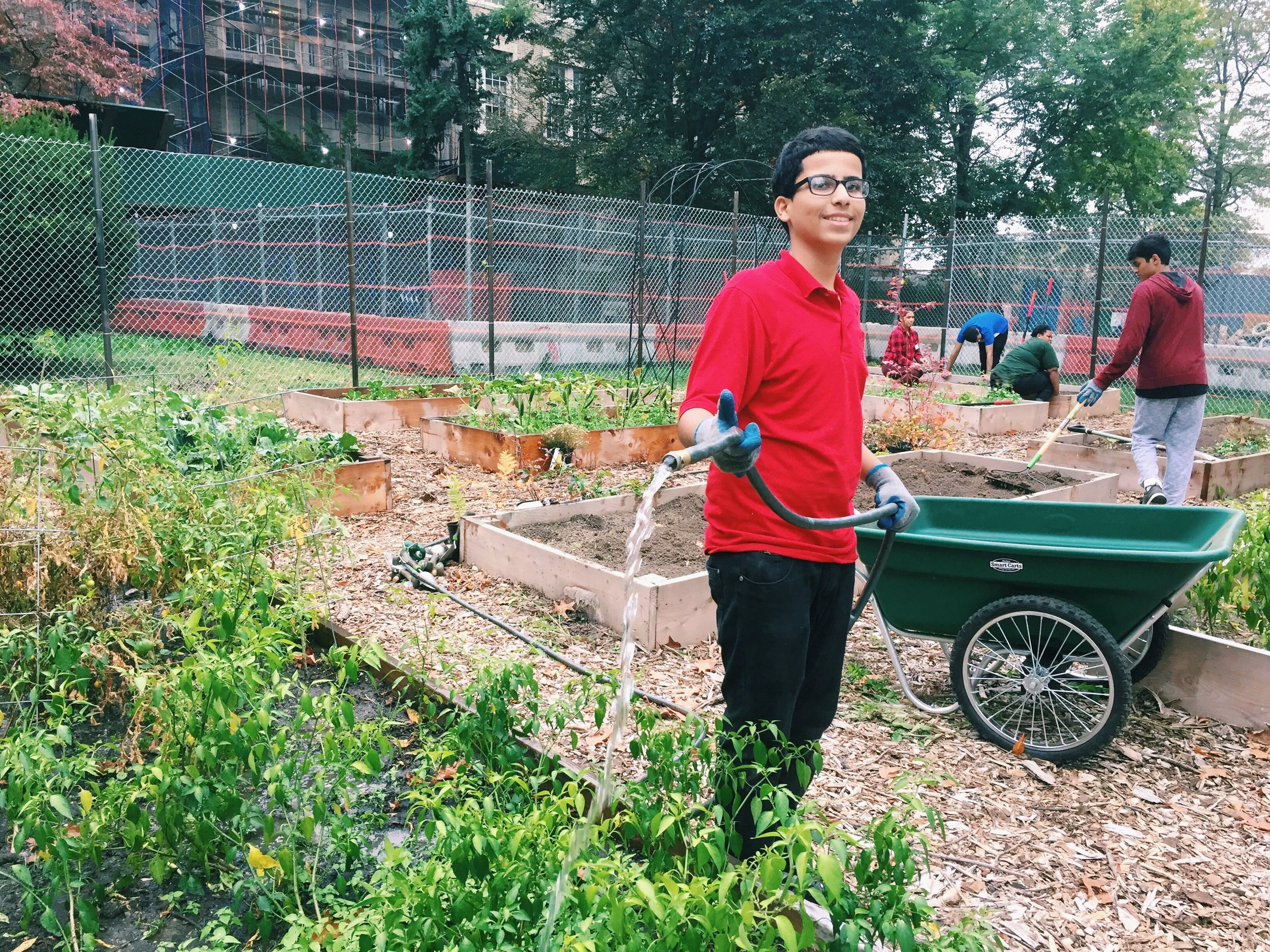 The community garden beds were in much need of some water and compost!