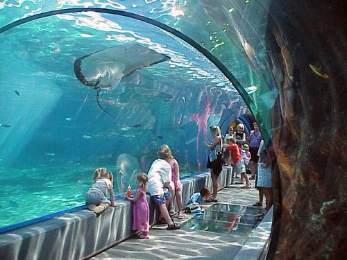 Aquariums & Sea Life Parks