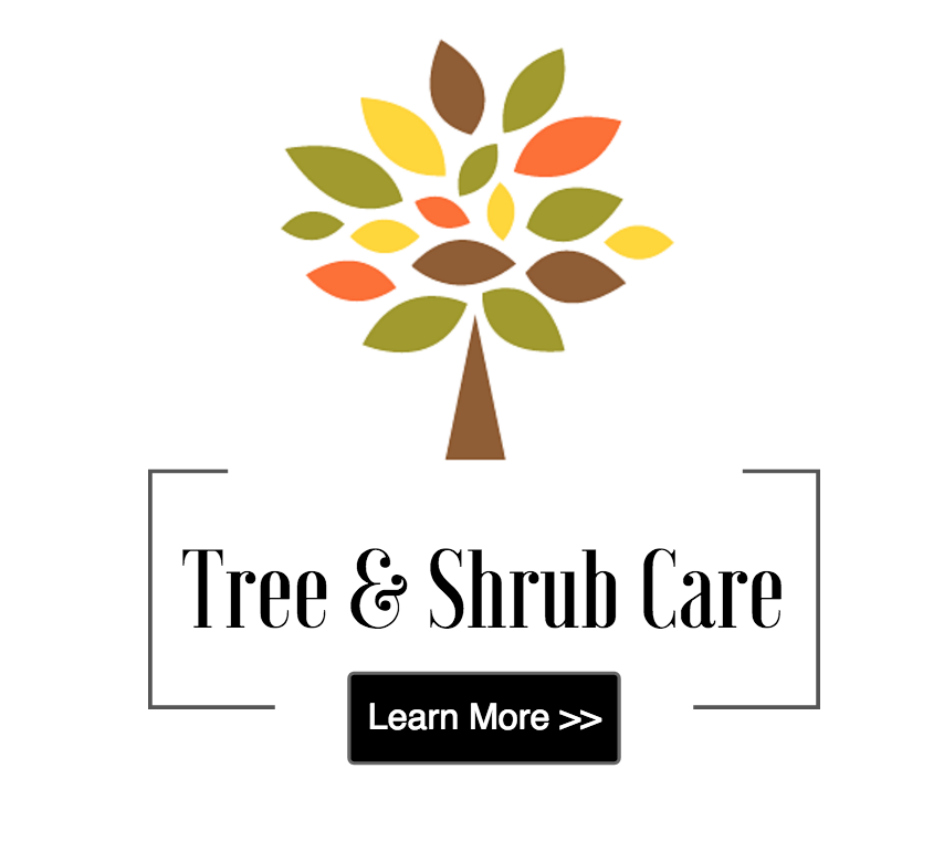 Tree & Shrub Care in Cold Spring, Beacon, Garrison, and Cortlandt Manor, NY