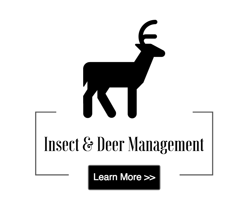 insect and deer management