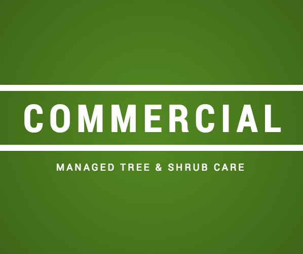 Commercial Tree Care, Tree Consulting, Landscaping in Cold Spring, Beacon, Garrison, and Cortlandt Manor, NY