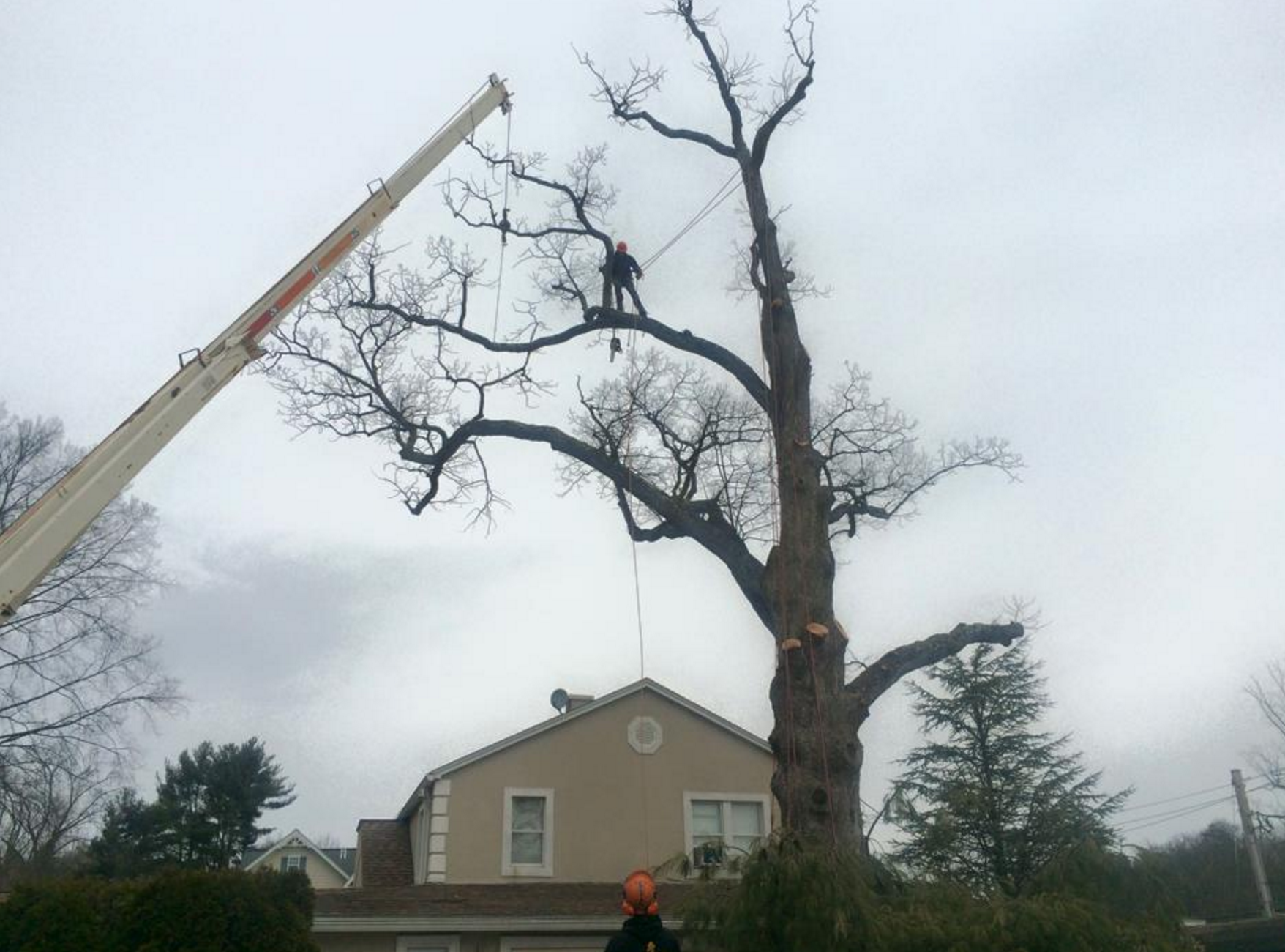 tree removal in garrison, cold spring, cortlandt manor, ny