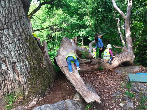treeclimbing2.png