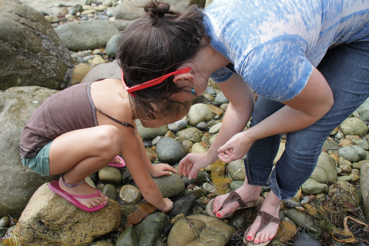 Hermit crab hunting