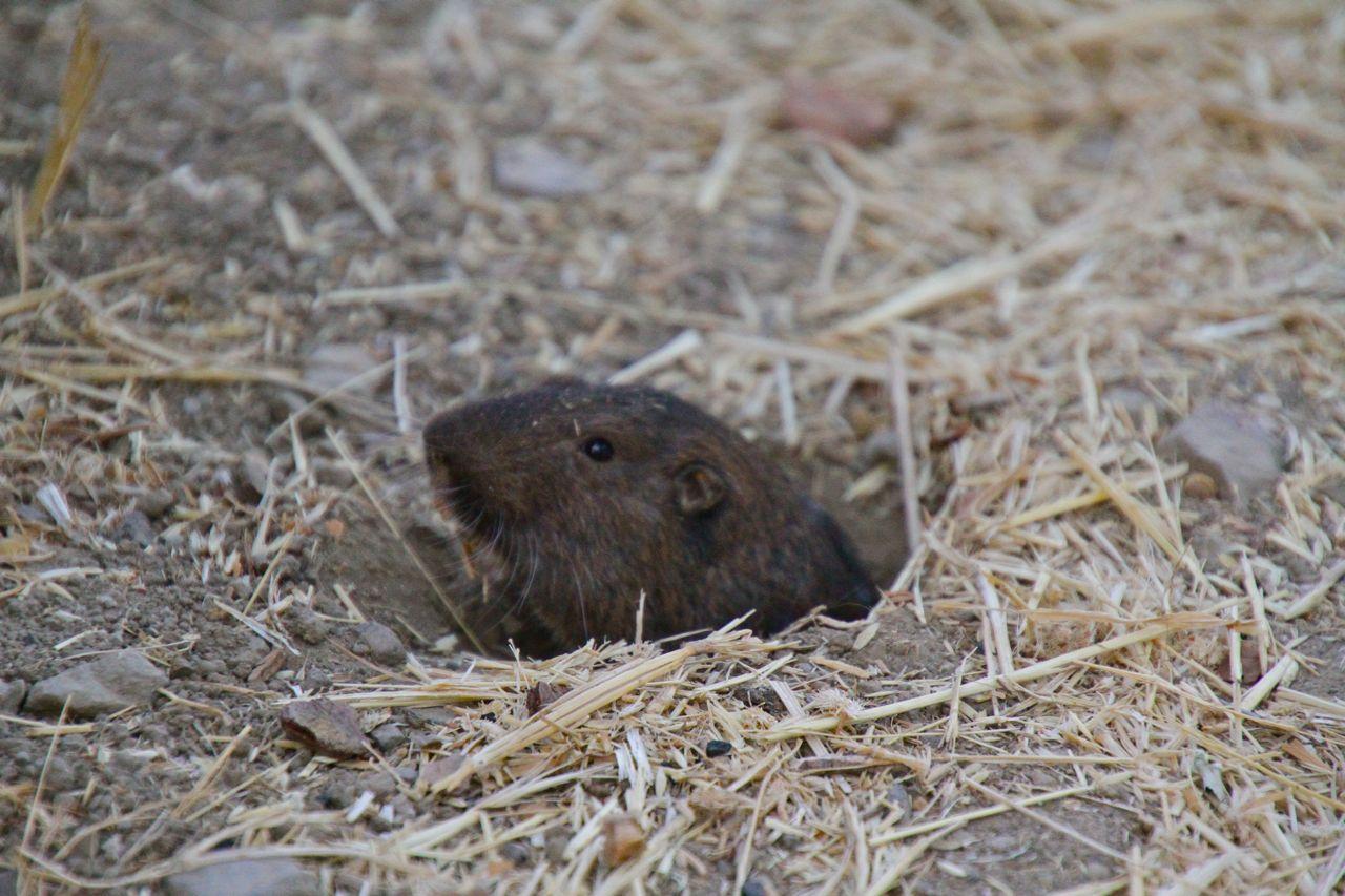 Camp visitor: mole guy