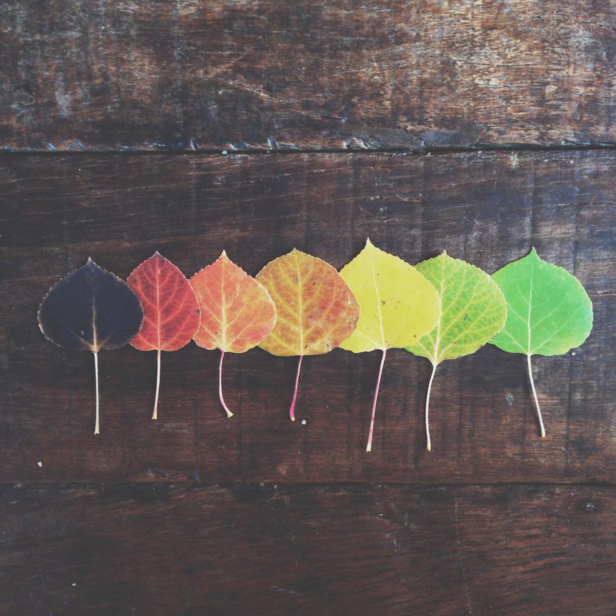 aspen-rainbow2.jpg